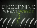 discerning wheat and weeds topic
