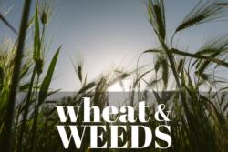 wheat-weeds-workplace-productivity-talent-development-leadership-skills