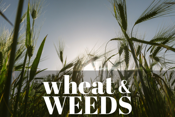 wheat-weeds-workplace-productivity-talent-development-leadership-skills
